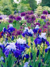 Long Blooming Annual Flowers - perennial flowers by season