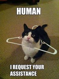 Weird Cat Meme - 809 best funny cat memes images on pinterest cute kittens funny
