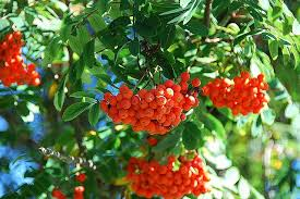 tips from denver tree service fruit and ornamental tree care