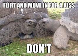 Gopher Meme - flirt and move in for a kiss don t funny tortoise meme