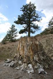 Tule Springs Fossil Beds National Monument Florissant Fossil Beds National Monument Wikiwand