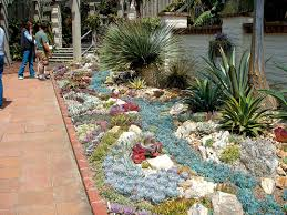 unique rock garden with succulents 75 in with rock garden with
