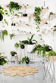 ivy home decor 110 best indoor garden ideas images on pinterest home ideas