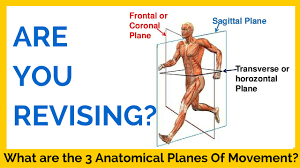 Human Anatomy Planes Of The Body What Are The Three Anatomical Planes Of Movement