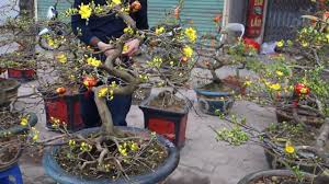 Flower Garden Hanoi by Vietnamese New Years Tet Flower Street In Hanoi Beautiful Youtube