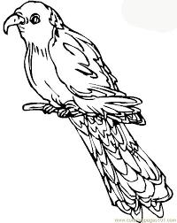 parrots coloring pages parrot coloring page free parrots coloring pages
