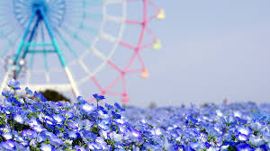 Blue Flower Backgrounds - flower wallpapers group 71