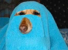 Burka Meme - barka muslim dog burka best funny pictures humor jokes