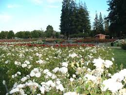 municipal rose garden san jose ca top tips before you go with