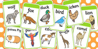 flashcards animal flashcards cards compare