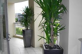 a modern feel with tall planters the urban balcony