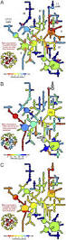computing the origin and evolution of the ribosome from its