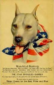 land of giants american pitbull terriers military pit bull poster jpg