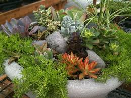 Indoor Garden Containers - 180 best succulent window boxes u0026 containers images on pinterest