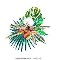 Flower Of Orchid - vector illustration bottle brush flowers banches stock vector