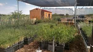 native plant nurseries the gila native plant nursery u2013 gila watershed partnership