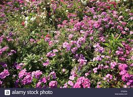 small plant with red violet bluish purple and white flowers in