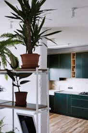 green kitchen and wall of plants feature in low budget apartment