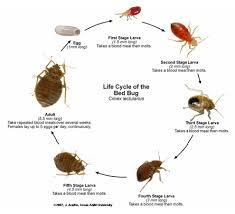 Treatment For Bed Bugs Pest Management Bed Bug Recognition And Treatment Program