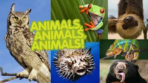 animals pictures picture