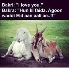 Eid Memes - eid al adha bakra love story memes pinterest eid desi