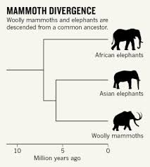 mammoth genomes provide recipe creating arctic elephants