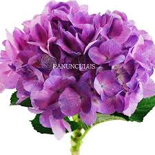 Bulk Hydrangeas Natural Purple Hydrangeas Bulk Hydrangeas