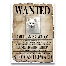 american eskimo dog tricks american eskimo dog christmas holidays fridge magnet wag whimsy