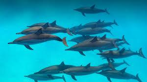 dolphin san diego zoo animals u0026 plants