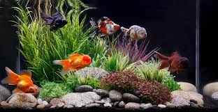 Aquarium Decor Ideas Aquarium Decoration Ideas Archives Meowlogy