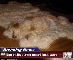 Melting Meme - melting dog meme by nikolazigic19 memedroid