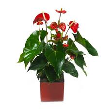 Plant Delivery Plant Delivery Plants Delivered Internationally Online Floraqueen