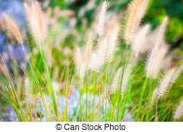 plante verte dans une chambre pastel plante nature couleur chambre arrière plan vert