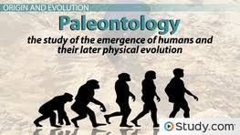 primates definition evolution u0026 characteristics video u0026 lesson