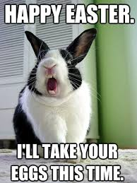 Funny Bunny Memes - top 60 funniest and crazy happy easter meme most crazy
