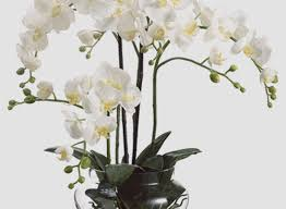 faux orchids faux flowers in vase awesome orchids in clear glass vase 25
