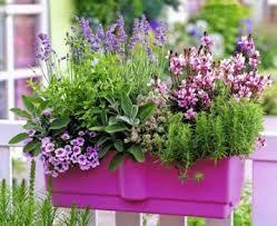Climbing Plants For North Facing Walls - plants for south facing balcony garden