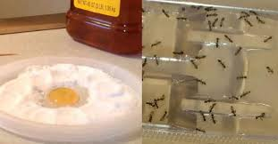 cafard cuisine plus jamais vous verrez une seule fourmi une puce ou un cafard dans