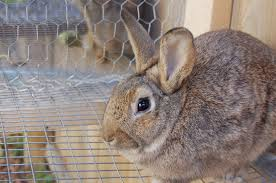 the basics of raising rabbits emergency outdoors blog