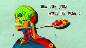 The Anatomy Of The Human Brain How Sugar Affects The Brain Nicole Avena Youtube