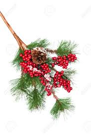 a pine tree branch covered with berries and snow and a