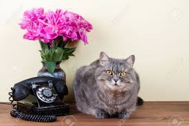 vintage telephone cat and flowers on table stock photo picture