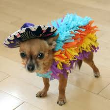 Halloween Costumes Dogs 59 Diy Dog Costume Ideas 2017 Images Costume