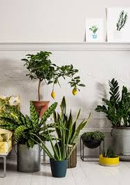 Plants To Keep In Bathroom How To Make The Most Of House Plants Life And Style The Guardian