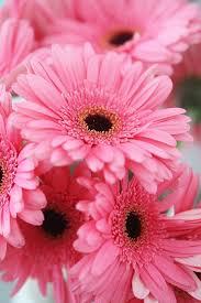 pink flower pink flower 25 best pink flowers ideas on pretty flowers