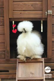 68 best galinhas images on pinterest chicken breeds ducks and