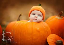 newborn photos pumpkins thanksgiving babies