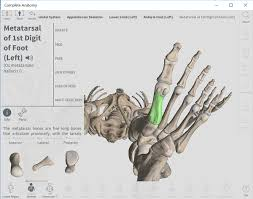 Primal Anatomy App Windows 10 Complete Anatomy App Is A Worthy Download