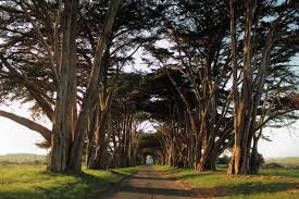 most don t northern california has a tunnel of trees and