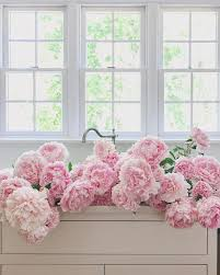 instagram pinkpeonies 187 likes 17 comments abby lifestyle u0026 travel abbycapalbo